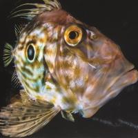 Il pesce e i veneziani 2 [75]