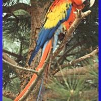 Il pappagallo cattivo [155]