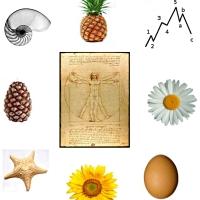 Fibonacci 1 [241]