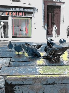 Venezia – 1961 – Piazzetta dei Leoncini col negozio di Venini. La piazzetta fa parte della Piazza San Marco, dove di apre il Patriarcato - Ernesto Giorgi ©