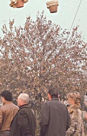 1981Candelora