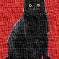 Il gatto nero 3 [513]