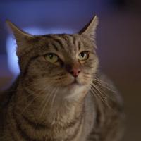 Arturo e il gatto soriano [594]